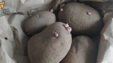 Картофель Вираж